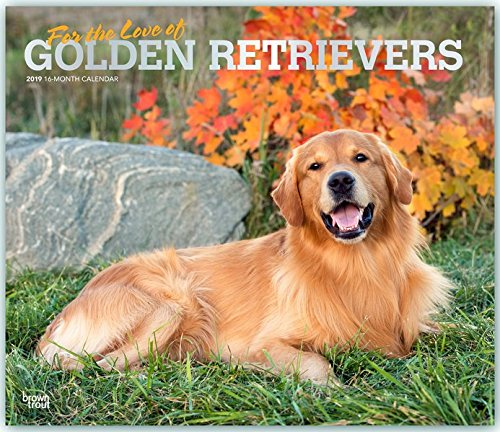 For the Love of Golden Retrievers 2019 14 x 12 Inch Monthly Deluxe Wall Calendar with Foil Stamped Cover, Animal Dog Breeds