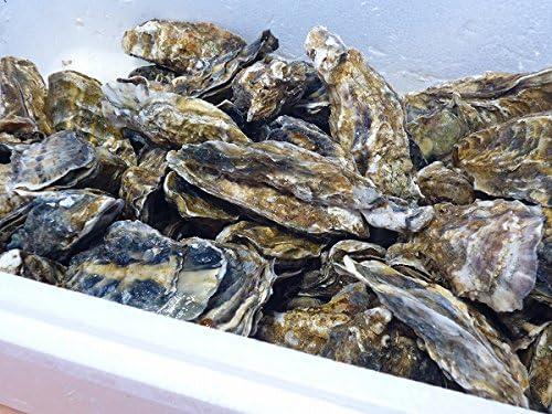 北海道・生牡蠣(かき)(殻付き)牡蠣・厚岸西岸 仙鳳趾【牡蛎】訳あり8キロ【生食用】