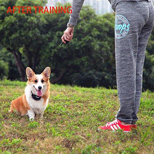 Yiscor De  Dog Training Collar