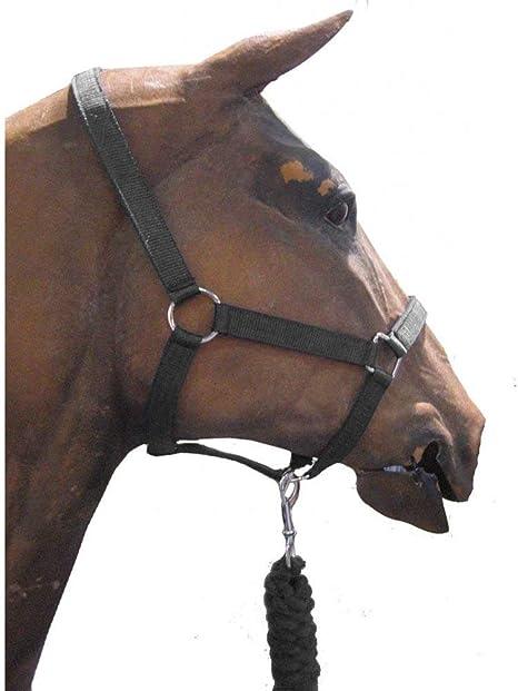 Rhinegold Padded Striped Headcollar /& Rope Set