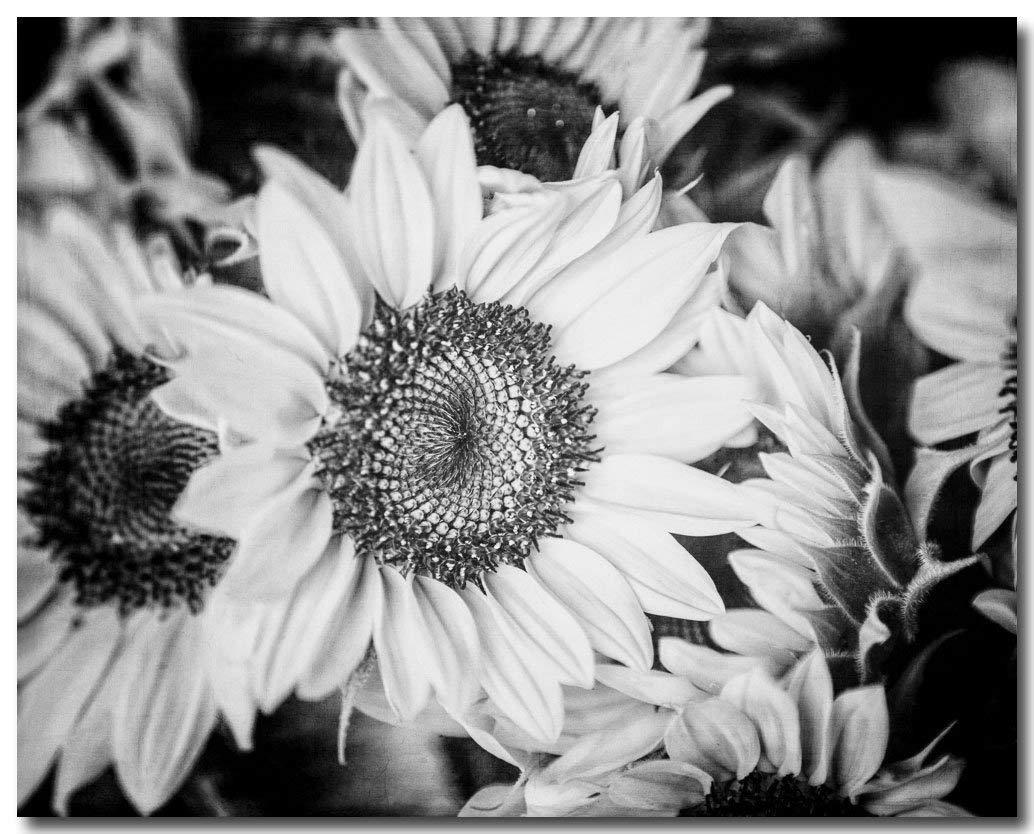 Amazon com black and white flower photograph sunflower decor