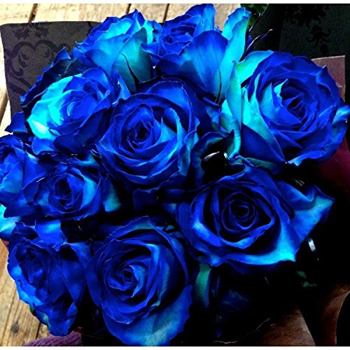 フローリストワタリ 【生花】4色グラデーション青バラ11本使用のアレンジメント(ブルー系) フラワーギフト プレゼント 誕生日 発表会 お祝い B01FUF1GES