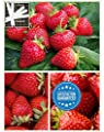 Organic Honeoye Strawberry 315 Seeds Upc 600188190847 + 1 Free Plant Marker