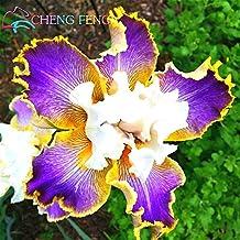 Hot 30pcs Iris Seeds Iris Orchid Seeds Perennial Rare Tectorum Flower Seeds For Outdoor Garden Planting Bonsai Easy Grow Seed *