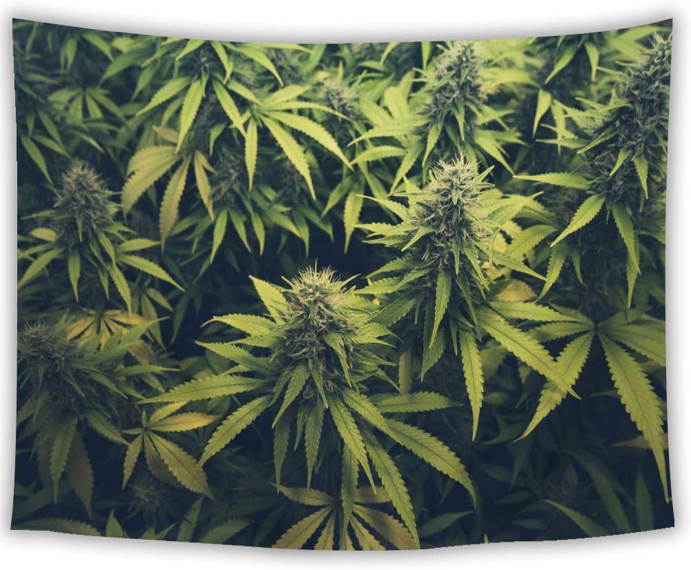 SVBright Green Weed Tapestry 51Hx59W Inch Cannabis Bud Marihuana Plants Leaves Natural Sativa Hemp Indica Grow Farm Art Wall Hanging Bedroom Living Room Dorm Decor Fabric