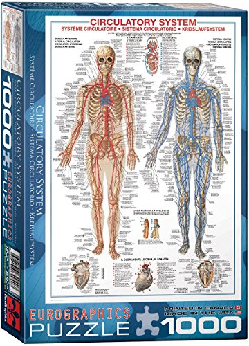 EuroGraphics Circulatory System 1000 Piece Puzzle