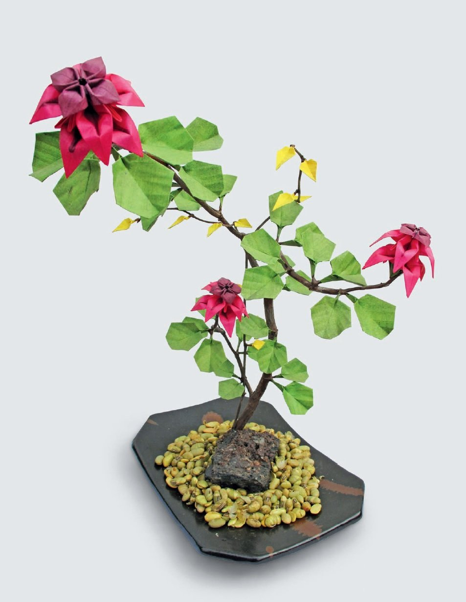 Origami Bonsai Create Beautiful Botanical Sculptures From Paper Origami Book With 14 Beautiful Projects And Instructional Dvd Video Coleman Benjamin John 9780804847872 Amazon Com Books