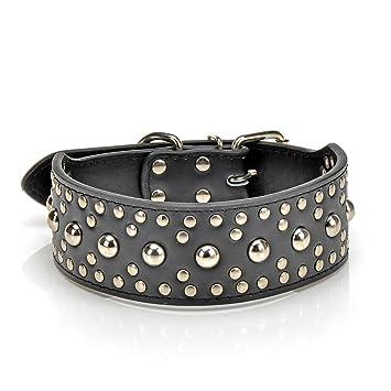 dog collar amazon