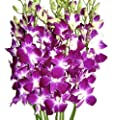 Just Orchids - Premium Long Stem Purple Dendrobium from Just Orchids