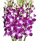Fresh Orchids- 10 Long Stemmed Purple Dendrobium