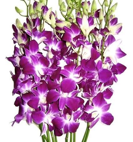 Amazon Com Fresh Flowers Purple Dendrobium Orchids Fresh Cut