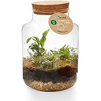 Ecoworld Pflanzen - Pflanzen im Glas Flaschengarten - Geschlossene Ökosysteme mit Beleuchtung - und Zimmerpflanzen