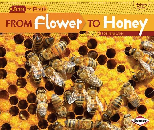 From Flower to Honey (Start to Finish: Nature's - Bees The Honey Save To How