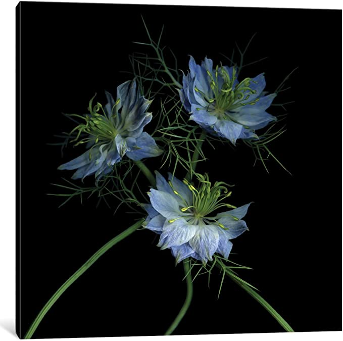 iCanvasART Seeds for Tomorrow Canvas Print 26 x 26