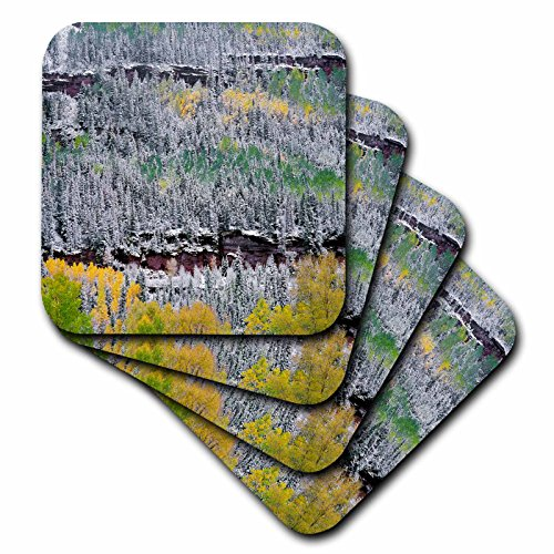 - 3dRose Danita Delimont - Trees - USA, Colorado, Uncompahgre Forest, San Juan Range, Fall snowstorm. - Coasters