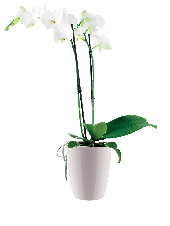 Drinnen Elho Brussels Diamond Orchidee Hoch 12,5 /Ø 12.7 x H 15.2 cm Blumentopf Weiss