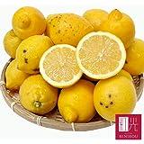 国産レモン 檸檬 れもん 果物 フルーツ レモン 静岡産 わけあり 訳あり B品 3.0kg ノーワックス 防腐剤未使用 国産 レモン 業務用レモン