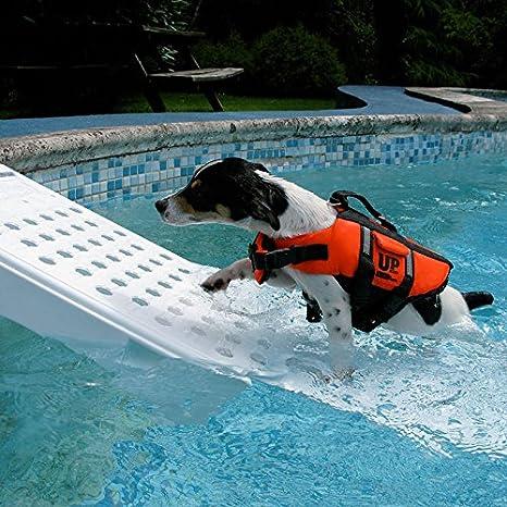 Provence Outillage-Rampa de piscina para perro RAMP: Amazon.es: Jardín