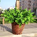 Gogogo 1X Artificial Fake Green Plant Eucalyptus Yard Home Planter D¨¦cor Outdoor Decoration