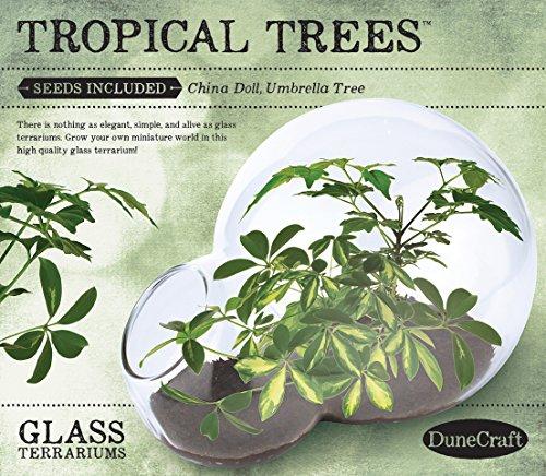 Dunecraft Tropical Trees - Tropical Terrarium
