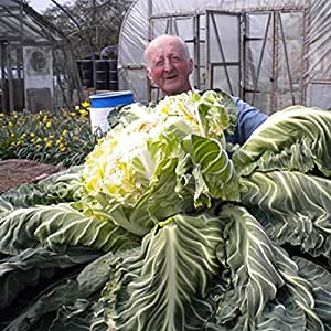Giant Cauliflower Seeds 50pcs Vegetable Bonsai seed For Garden & Home Plant Interest Exotic Farm Easy to plant