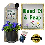 Wallflowers - Rustic Sconce Planter - Wall Mounted - Mini Garden Tool and Forget Me Not Seeds (Weed It and Reap)