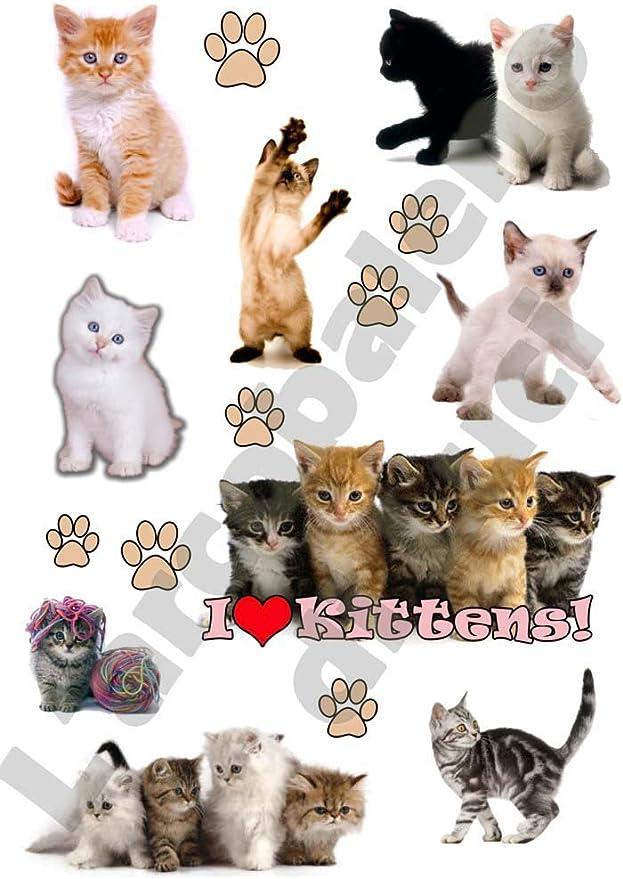 AWS 9 Stickers Gatitos Gatos I Love Gatitos Cachorros Pegatinas Impermeables Sugar Cat Cats Gato Wipe Micio Pegatinas para para Coche o Moto Paws Vinilo Vinyl 29,7_x_21_cm: Amazon.es: Coche y moto