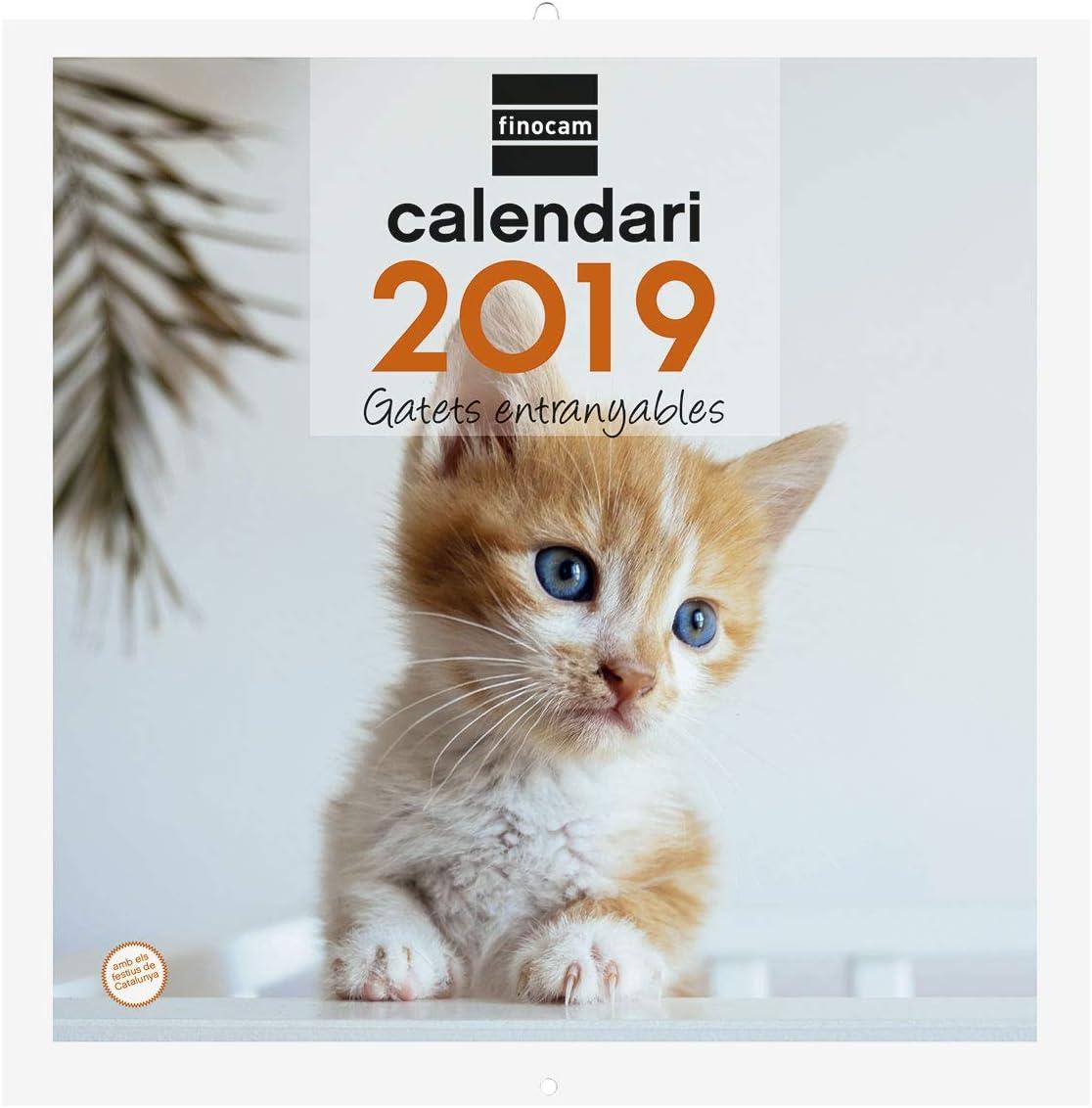 Finocam 780312919 - Calendario de pared 2019: Amazon.es: Oficina y papelería