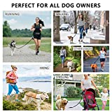 Hands Free Dog Leash for Running Walking Training