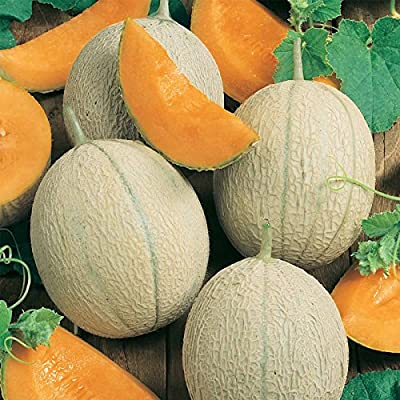 Cantaloupe Melon Garden Seeds - Hearts of Gold - Non-GMO, Heirloom, Vegetable Gardening Seeds - Fruit