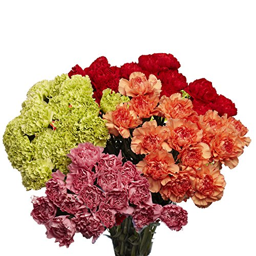 GlobalRose 200 Fresh Cut Assorted Color Carnations- Fresh Flower Delivery