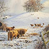 Medici Christmas Cards - Highland Cattle (0003) Box Of 16 Cards by GBCC