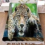 iPrint Bed Skirt Dust Ruffle Bed Wrap 3D Print,Wild Animal Carnivore Endangered Feline Safari,Best Modern Style Bed Skirt for Men and Women by 59''x78.7''