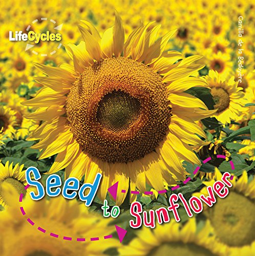 (Seed to Sunflower (LifeCycles))