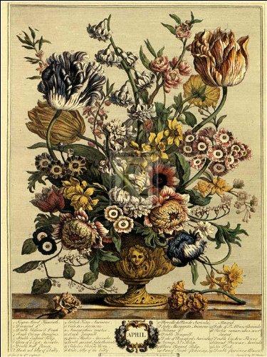 Robert Furber - Twelve Months of Flowers 1730/April 15 x 20 (Flowers Of Twelve Months)