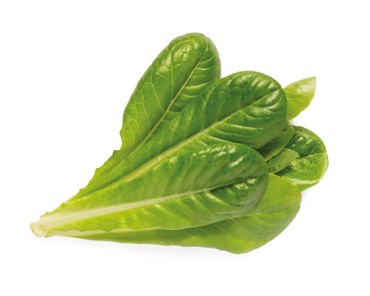 Click and Grow Smart Garden Romaine Lettuce Plant Pods 3-pack
