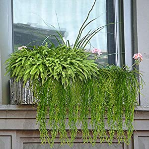 Artificial Plants Vines Fern Willow Wicker Twig Fake Hanging Plant Faux Curly Seaweed Ferns Flowers Vine Outdoor UV Resistant Plastic Plants for Wall Indoor Hanging Baskets Wedding 5