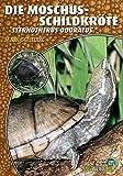 Die Moschusschildkröte: Sternotherus odoratus (Art für Art)