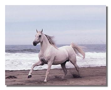 Amazoncom White Horse Running On Sand Ocean Beach 2 Photo Wall