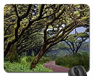 Along the Path We Go Mouse Pad, Mousepad (Forests Mouse Pad) by mcsharks