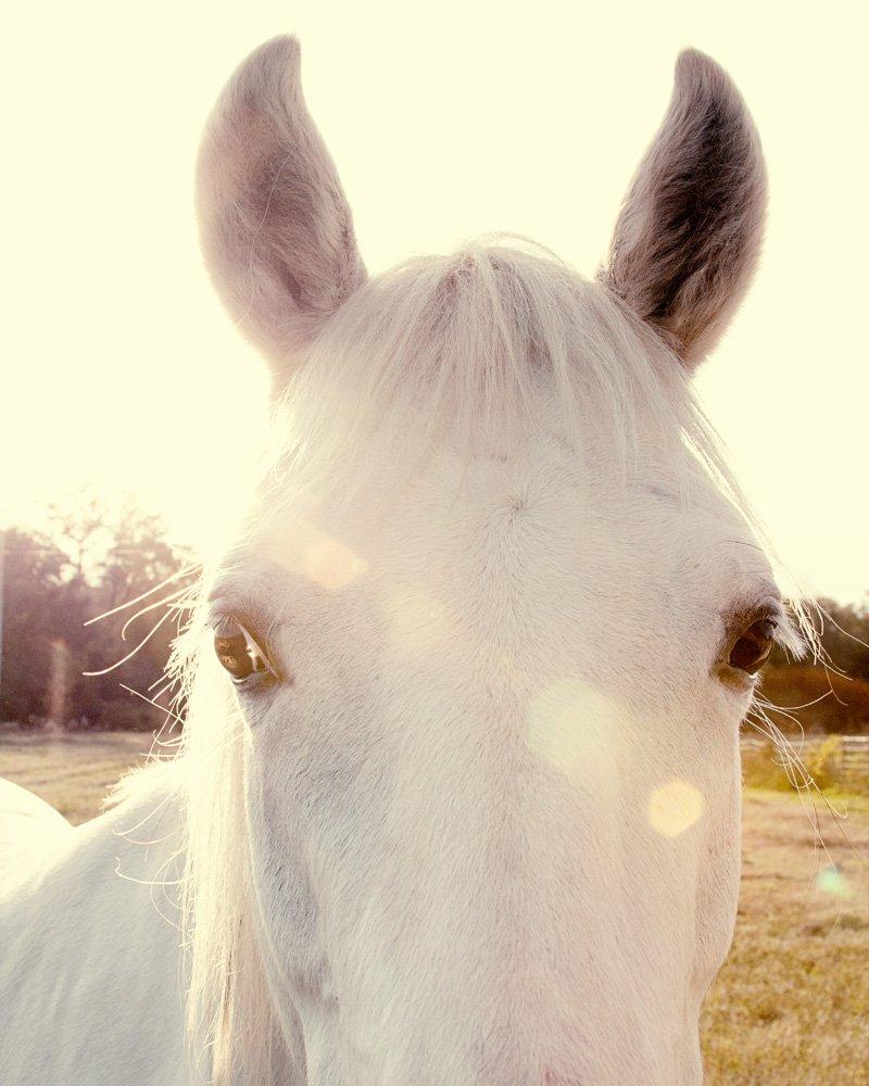 Sunshine Horse Rustic Farmhouse Fine Art Animal Photography Print Living Room Wall Art