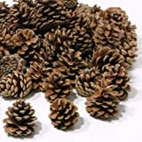 1kg (50) Austriaca Florist Fir Pine Cones Natural