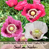 "200 Seeds, Poppy ""Pepperbox"" (Papaver Somniferum) Packaged By Seed Needs"