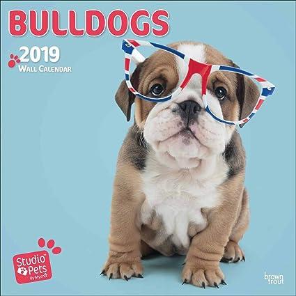 Calendario 2019 Bulldog Inglés Myrna - Cachorros - Bulldog + ...