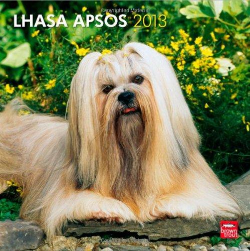 Lhasa Apsos 2013 - Lhasaterrier - Original BrownTrout-Kalender