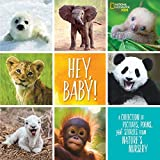 img - for Hey, Baby!: A Collection of Pictures, Poems, and Stories from Nature's Nursery (National Geographic Kids) book / textbook / text book