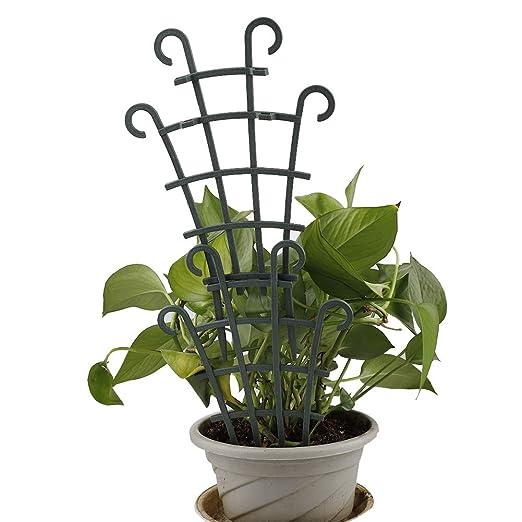 SUREH - 6 enrejados de plástico para Plantas pequeñas de Interior ...