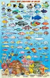 Belize Dive Map & Reef Creatures Guide Franko Maps Laminated Fish Card