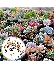 BigFamily 400pcs Mixed Succulent Seeds Rare Living Stones Plants Cactus DIY Home Garden