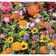 9GreenBox Wildflower Seeds- 1000+ Low Growing